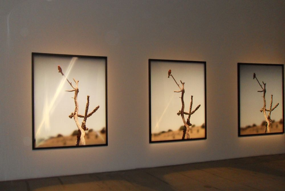 Jean-Luc Mylayne, N° 334, Avril Mai 2005, 193 x 155 cm, Installationsansicht Biennale von Venedig 2011; Foto: Alexandra Matzner.