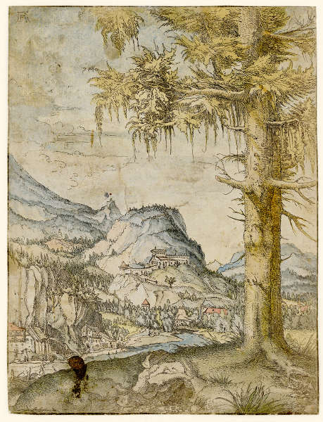 Albrecht Altdorfer, Landschaft mit großer Fichte, um 1517–1520, Radierung, aquarelliert, 23,2 x 17,7 cm (Wien, Albertina © Wien, Albertina Museum)