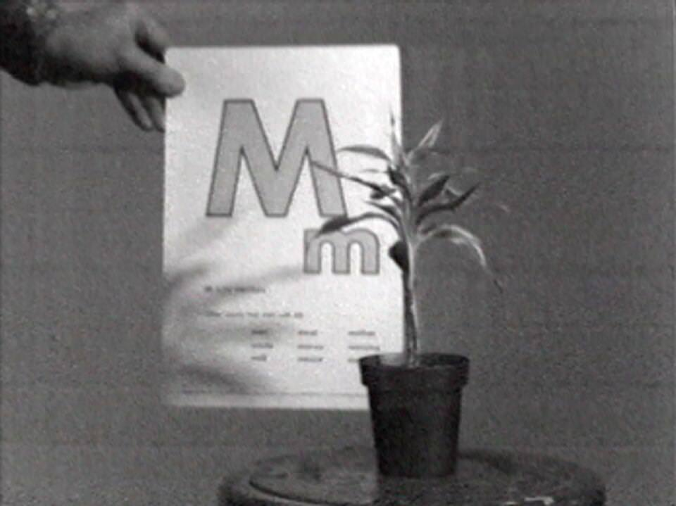 John Baldessari, Teaching a Plant the Alphabet, 1972 (Courtesy Electronic Arts Intermix (EAI), New York)