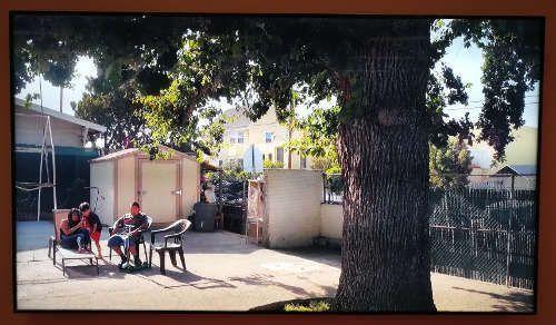 Christian Kosmas Mayer, Life Story of C. Johnson's Olympic Oak, Eiche (Filmstill), Ausstellungsansicht mumok, Foto: Alexandra Matzner, ARTinWORDS.