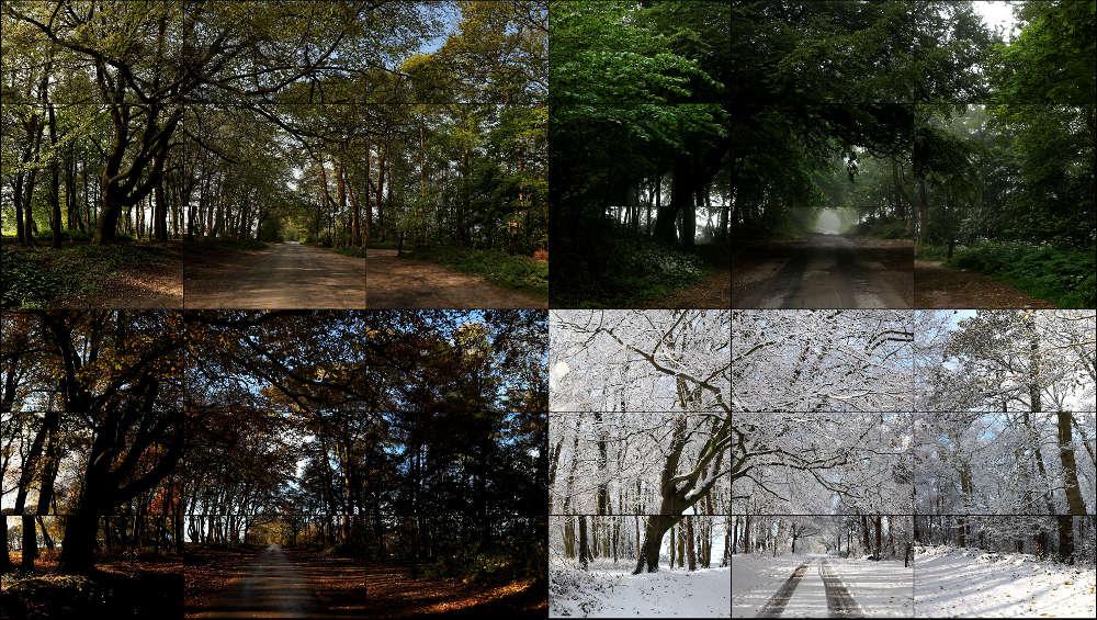 David Hockney, The Fours Seasons, Woldgate Woods, 2010/11 (Spring 2011, Summer 2010, Autumn 2010, Winter 2010), 36 Videos, 205,7 x 364,4 cm, 4:21 Min. © David Hockney