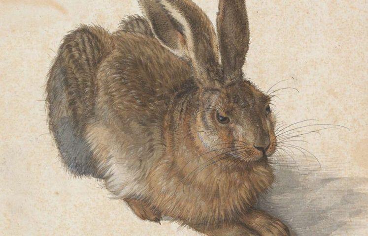 Albrecht Dürer, Feldhase, Kopf, 1502 (© Albertina, Wien)