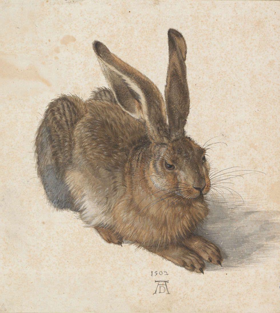 Albrecht Dürer, Feldhase, 1502, Aquarell und Deckfarben, in Deckweiß gehöht, Spuren einer Vorzeichnung am rechten Ohr, 25 x 22,5 cm (© Albertina, Wien, Inv.-Nr. 3073)