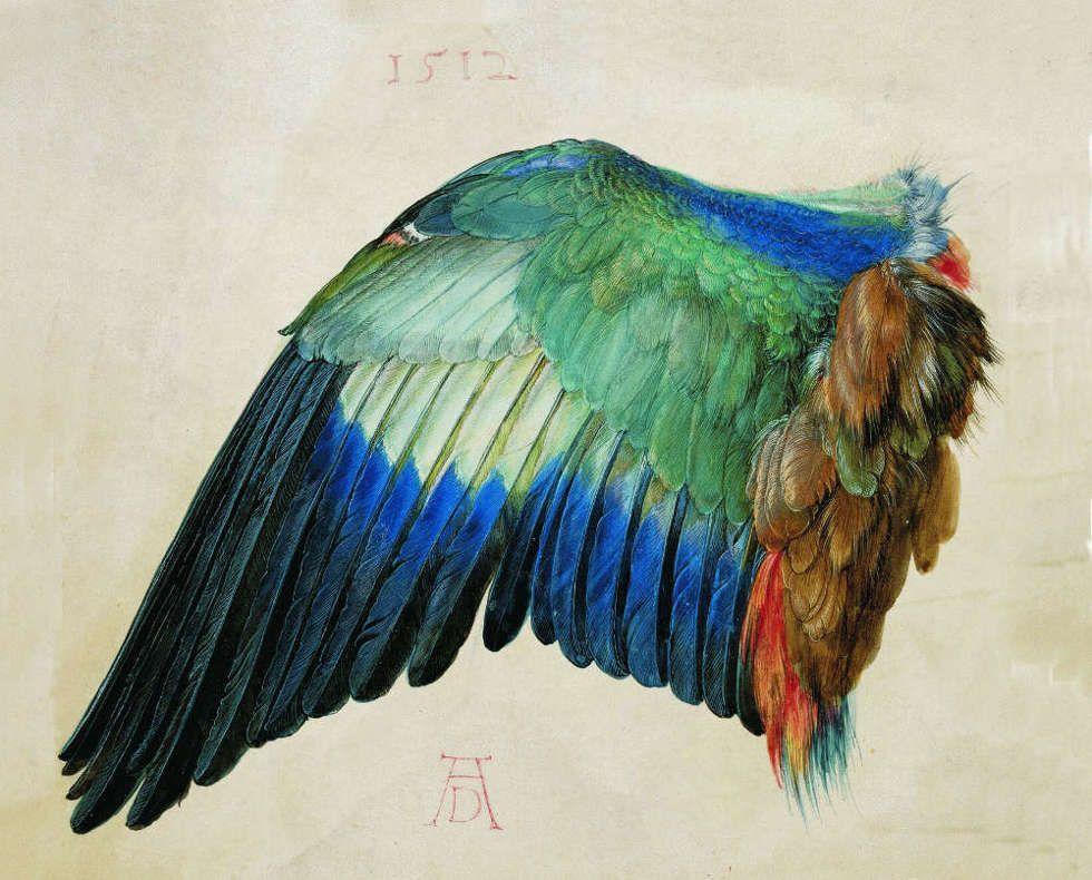 Albrecht Dürer, Der Flügel einer Blauracke, um 1500 (oder 1512) (© Albertina, Wien)