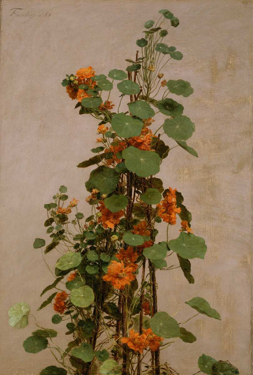 Henri Fantin-Latour, Capucines doubles [Gebundene Kapuzinerkresse], 1880, Öl auf Leinwand, 62,8 x 42,5 cm (© Victoria and Albert Museum, London)