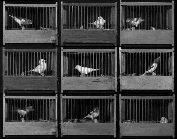 Gabriele Rothemann, Vierundzwanzig Vogelkäfige, Rauminstallation, 2009