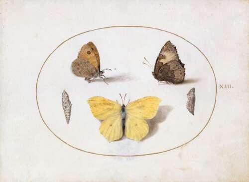 Georg Hoefnagel, XIIII Schmetterlinge, Aquarell auf Pergament, 1578-1592, Kupferstichkabinett – Staatliche Museen zu Berlin, © bpk / Kupferstichkabinett, SMB / Jörg P. Anders