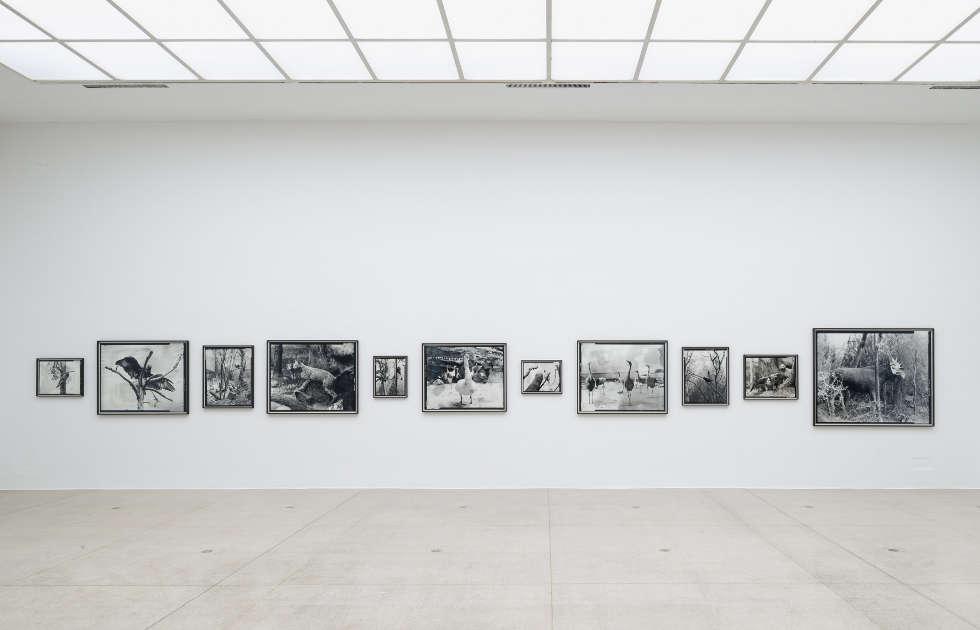 Gerard Byrne, Beasts, 2018, Ausstellungsansicht Secession 2019, Foto: Iris Ranzinger
