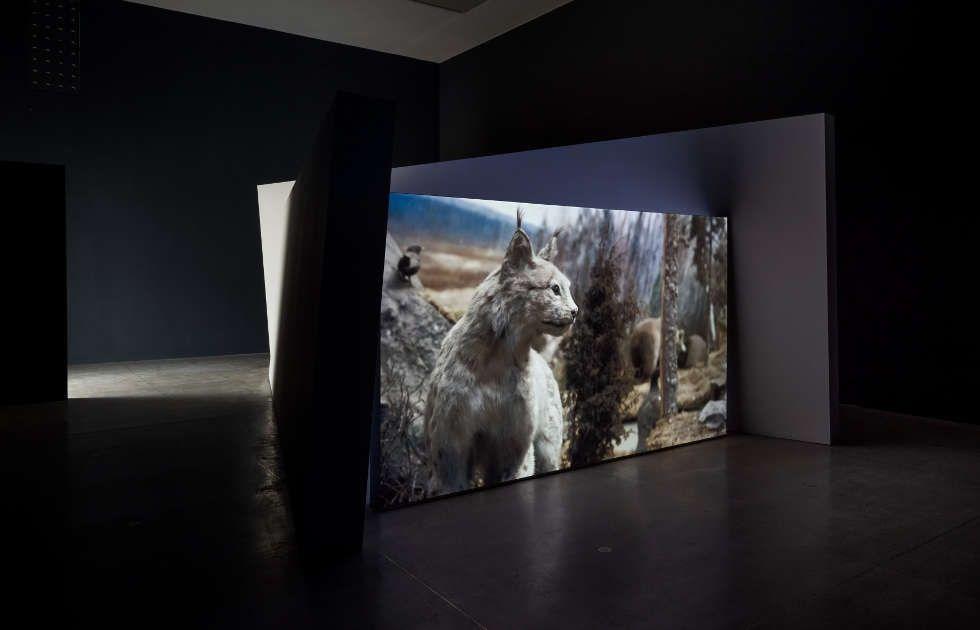 Gerard Byrne, Jielemeguvvie guvvie sjisjnjeli – Film Inside an Image, 2016, Ausstellungsansicht Secession 2019, Foto: Iris Ranzinger