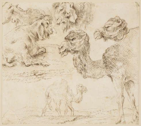Giovanni Benedetto Castiglione, Studien von Dromedaren und Ziegen, um 1630 (Royal Collection, Windsor, RCIN 903945)
