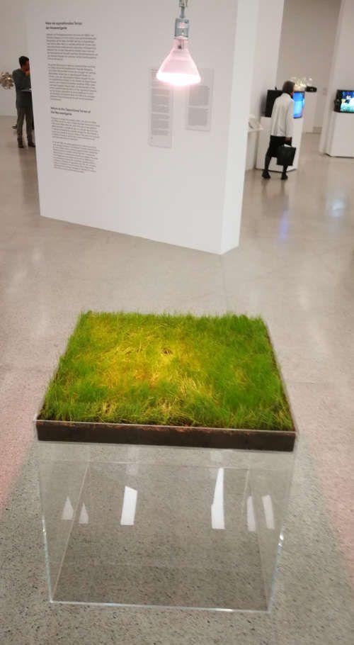 Hans Haacke, Grass Cube, Ausstellungsansicht mumok, Foto: Alexandra Matzner, ARTinWORDS.