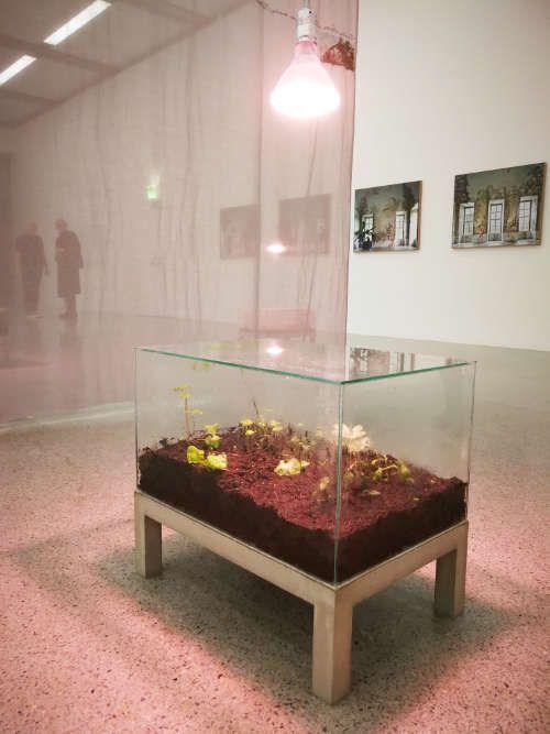 Isa Melsheimer, Plant Hunters (Ward'scher Kasten und Vorhang), Ausstellungsansicht mumok, Foto: Alexandra Matzner, ARTinWORDS.