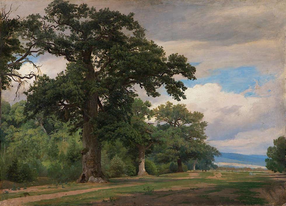 Johann Wilhelm Schirmer, Große Eiche auf Waldschneise