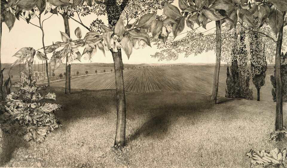 Klemens Brosch, Weigelienblüten, 1912, Feder in Tusche, 48 x 63,6 cm (Grafische Sammlung, Landesgalerie Linz des OÖ. Landesmuseum)