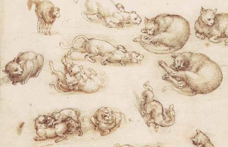 Leonardo da Vinci, Katzen, Löwen und ein Drache, Detail, um 1513–1518, Feder und Tusche mit Lavierung über schwarzer Kreide, 27 x 21 cm (Blattmaß) (Royal Collection of the Queen, Inv.-Nr. RCIN 912363)