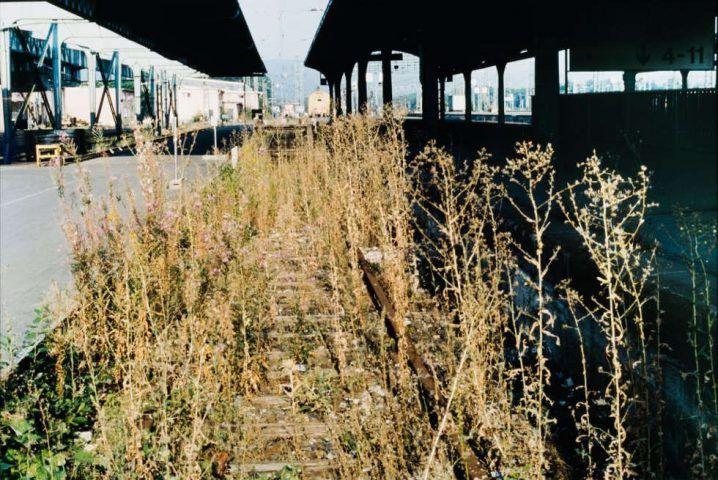Lois Weinberger, Das über Pflanzen/ist eins mit ihnen, 1997, Farbfoto, kaschiert auf Museumskarton, Ex.2/5, 73,7 x 108,5 gerahmt (Wien Museum)