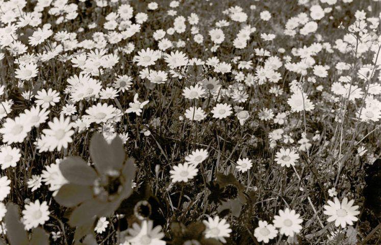 """Manfred Willmann, Ich träume nie!, Detail, Teil 3 aus der Serie """"Schwarz und Gold"""", 1979–1981, Silbergelatineabzug (Albertina, Wien © Manfred Willmann)"""