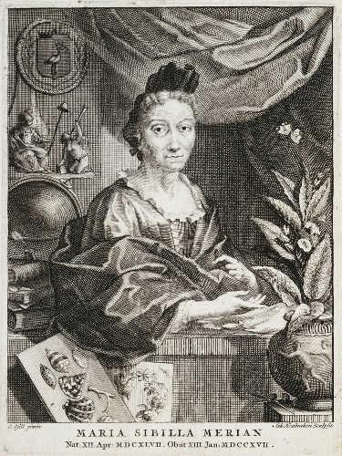 Maria Sibilla Merian, von Gsell und Houbraken (Stich), nach 1717, Kupferstich (Royal Collection Trust/© Her Majesty Queen Elizabeth II 2017, Inv.-Nr. RCIN 670216)