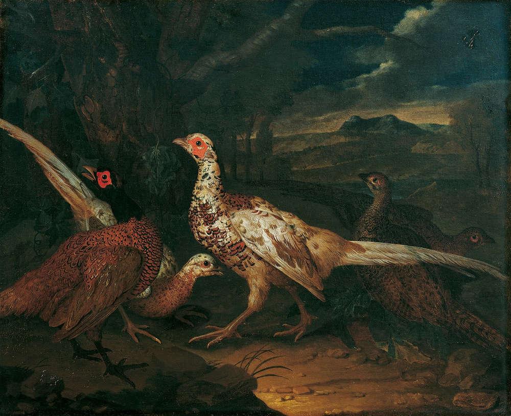 Philipp Ferdinand de Hamilton, Fasane, 1745, Öl auf Leinwand, 79 x 98 cm © Belvedere, Wien