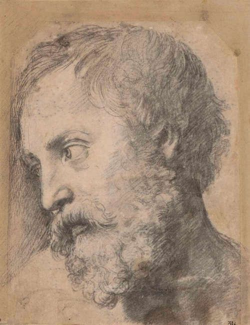 """Raffael, Apostelkopf (Studie für die """"Transfiguration""""), 1519/20 (© Albertina, Wien)"""