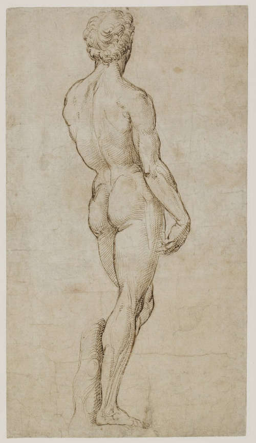 Raffael, David nach Michelangelo, Rückseite, 1504-1508, Feder, braune Tinte, Spuren von Kohle, 39,6 x 21,9 cm ((c) The Trustees of the British Museum)