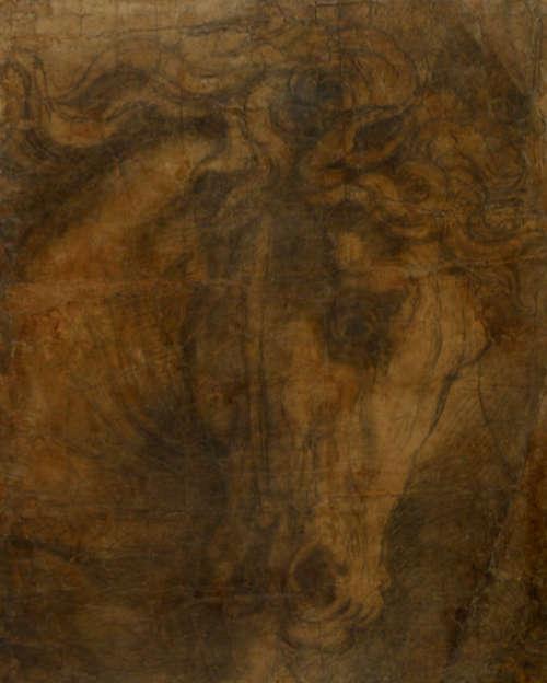 Raffael, Pferdekopf (Karton für die Vertreibung g des Heliodor) (Ashmolean Museum, Oxford, Inv. WA1846.197)