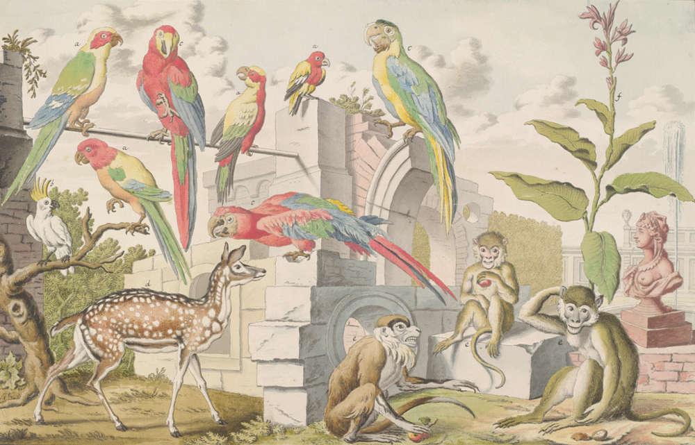 Salomon Kleiner, Papageien, Affen und Damwild (Stecherzeichnungen ausländischer Tiere der Menagerie des Feldmarschalls Prinzen Eugen von Savoyen in Wien), 1732 (Albertina, Wien)