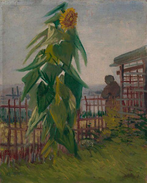 Vincent van Gogh, Kleingarten mit Sonnenblume, Paris, Juli 1887, Öl/Lw, 43.2 x 36.2 cm (Van Gogh Museum, Amsterdam (Vincent van Gogh Foundation)