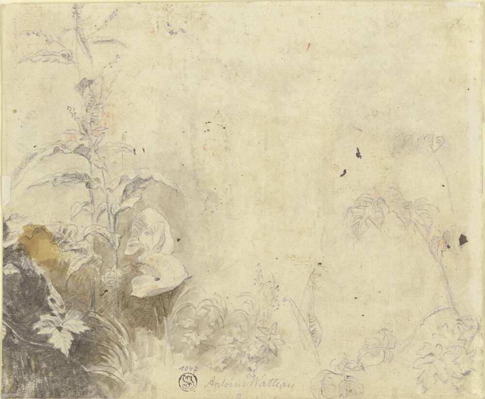 Antoine Watteau, Pflanzenstudie, um 1709-1712 oder um 1717 (?), Aquarell in Braun und Grau über schwarzer Kreide, einige Spuren roter Kreide, 16,5 × 20 cm (Städel Museum, Frankfurt am Main Foto: Städel Museum – ARTOTHEK)
