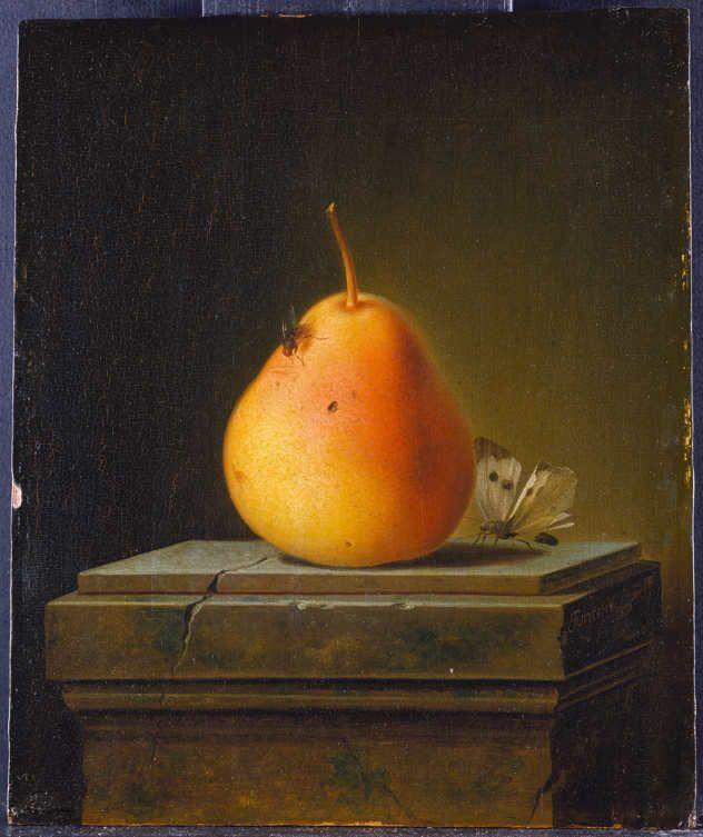 Justus Juncker, Birne mit Insekten, 1765, Städel Museum, Frankfurt am Main © ARTOTHEK.