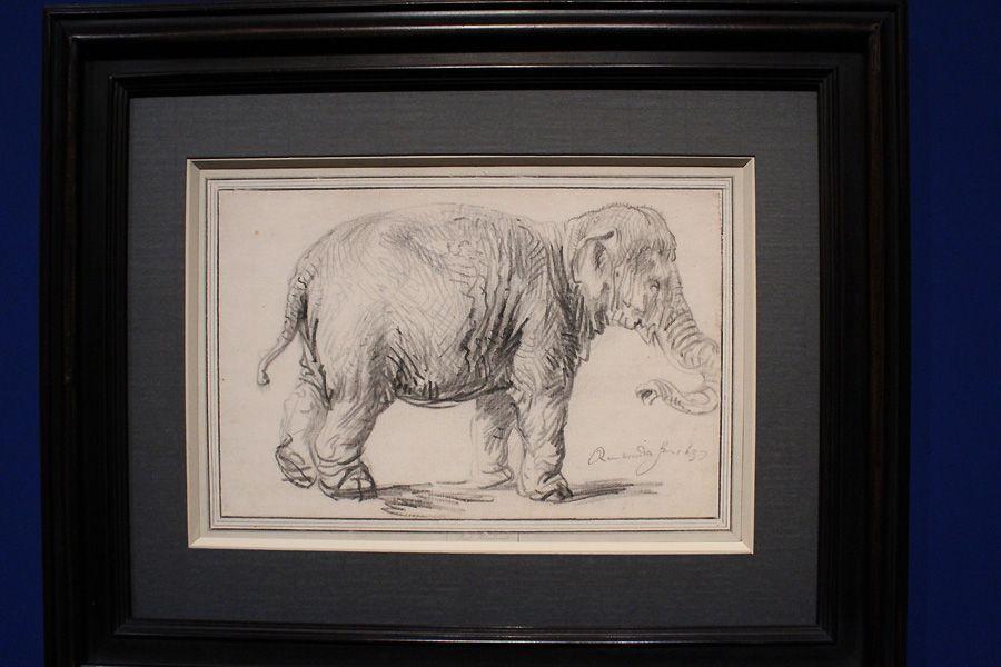 Rembrandt, Ein Elefant, 1637 datiert und signiert, Kreide, Installationsansicht in der Albertina, Foto: Alexandra Matzner.