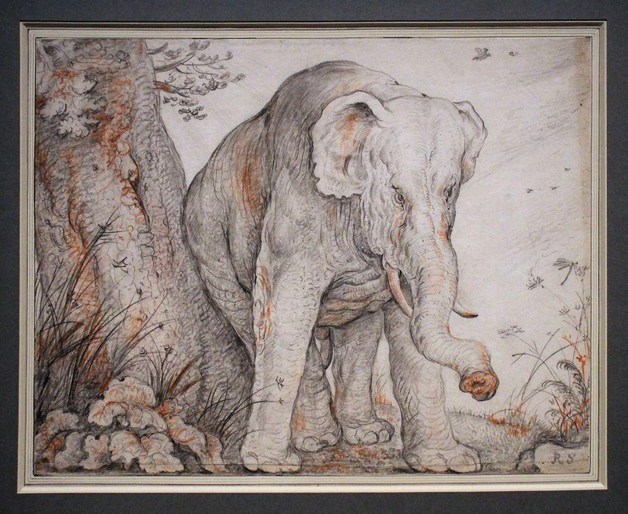 Roelant Savery, Ein Elefant, sich an einem Baum reibend, um 1608-12, Feder, Installationsansicht in der Albertina, Foto: Alexandra Matzner.