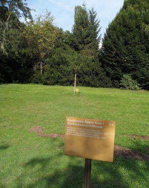 Korbiniansapfelbaum, gepflanzt von Carolyn Christov-Bakargiev, 2011, Karlsaue, Ausstellungsansicht dOCUMENTA (13) 2012, Foto: Alexandra Matzner