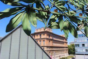Blick von der Secessionskuppel auf die Akademie der bildenden Künste Wien, Foto: Alexandra Matzner.