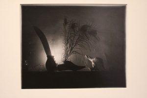 Josef Sudek, Still Life Caravaggio Night I, 1956, Silbergelatineabzug, 24 x 30 cm, Foto: Alexandra Matzner © Belvedere, Courtesy Galerie Johannes Faber