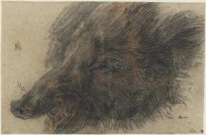 Jean Siméon Chardin, Eberkopf, Kreide auf Papier, 26,5 x 40,4 cm (Nationalmuseums, Stockholm)
