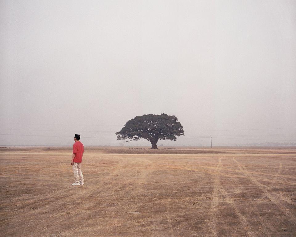 Loan Nguyen, Arbre seul, 2005, C-print auf Aluminium kaschiert, Ed. 2/8 © Loan Nguyen / SAMMLUNG VERBUND, Wien.