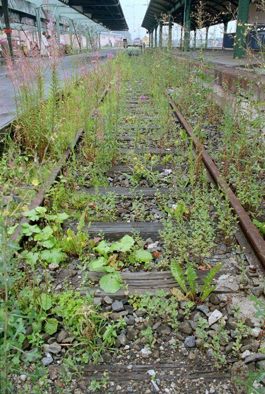 Lois Weinberger, Das über Pflanzen ist eins mit ihnen, documenta X, Kassel 1997, Bahngleis mit Neophyten aus Süd- und Südosteuropa, 100 m lang, Foto: Dieter Schwerdtle.