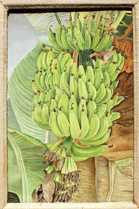 Lucian Freud, Bananas, 1953, Southampton, Foto: Alexandra Matzner © The Lucian Freud Archive / The Bridgeman Art Library.