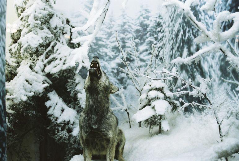 """Lina Scheynius, Untitled (Wolf)), aus """"Sarajevo series"""", 2009, C- und SW-Prints, 104 x 150,5 cm / 100 x 73,3 cm / 80 x 58,3 cm, © Lina Scheynius."""