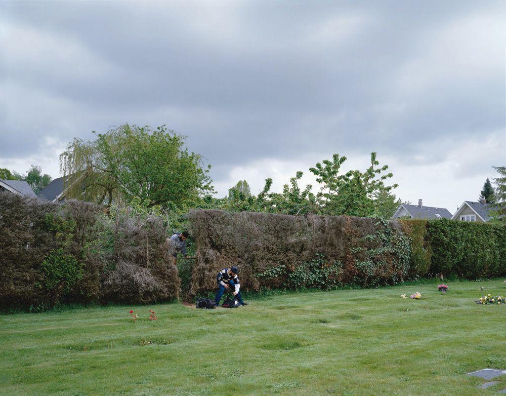 Jeff Wall, Boys Cutting Through a Hedge, 2003, Großbilddia in Leuchtkasten © Jeff Wall / SAMMLUNG VERBUND, Wien, Courtesy Jeff Wall Studio Vancouver and Marian Goodman Gallery, New York/Paris.