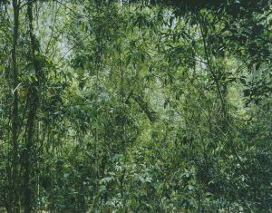 Thomas Struth, Paradies 9, Xi Shuang Banna, Provinz Yunann in China, 1999, C-Print, 269,4 x 339,4 cm © Thomas Struth