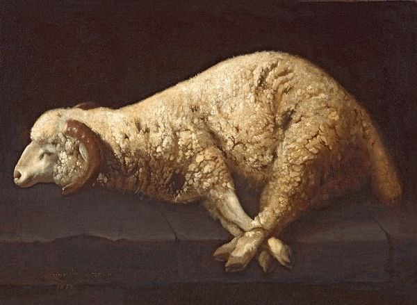 Francisco de Zurbarán, Das gefesselte Lamm, 1632, Öl auf Leinwand, 61,3 x 83m2 cm (Barcelona, Privatsammlung).